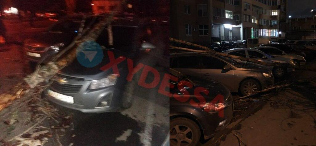 Вночі 6 лютого в Одесі безліч дерев повалило на припарковані авто