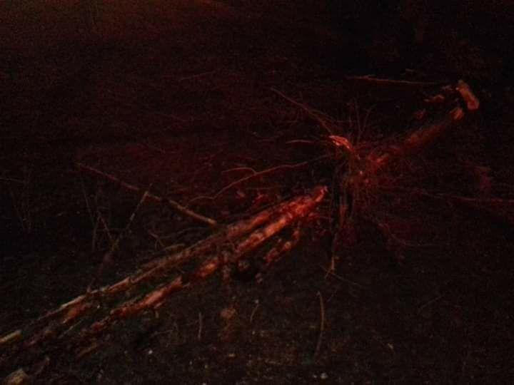 Вночі 6 лютого в Одесі повалило 48 дерев