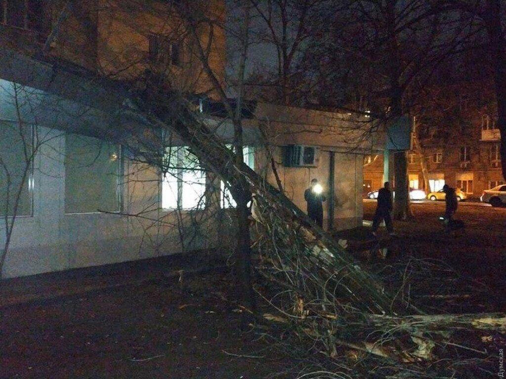 Вночі 6 лютого в Одесі акація впала на дах банку
