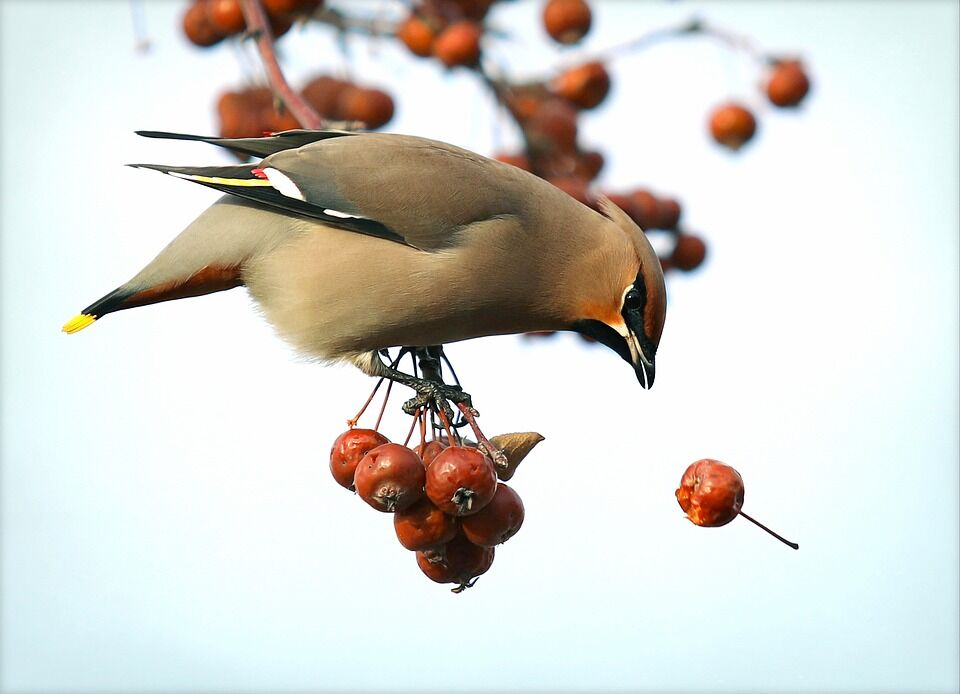 День весеннего равноденствия славяне связывали с прилетом птиц