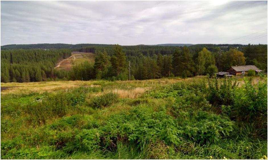 Живописные окрестности Медвежьегорска