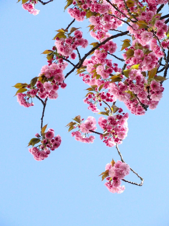 Прикмети і свята 26 березня: що не можна робити в цей день
