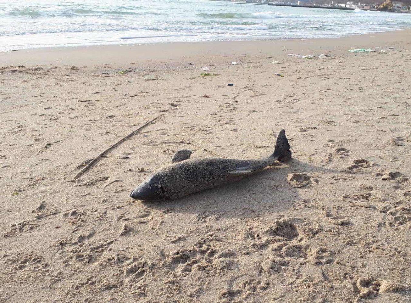 В Одесі на березі моря виявили загиблого дельфіна