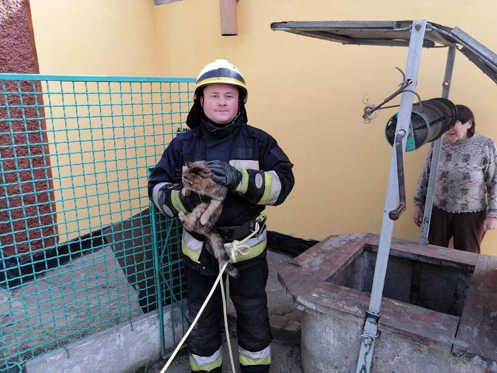 Порятунок кота в Дніпрі