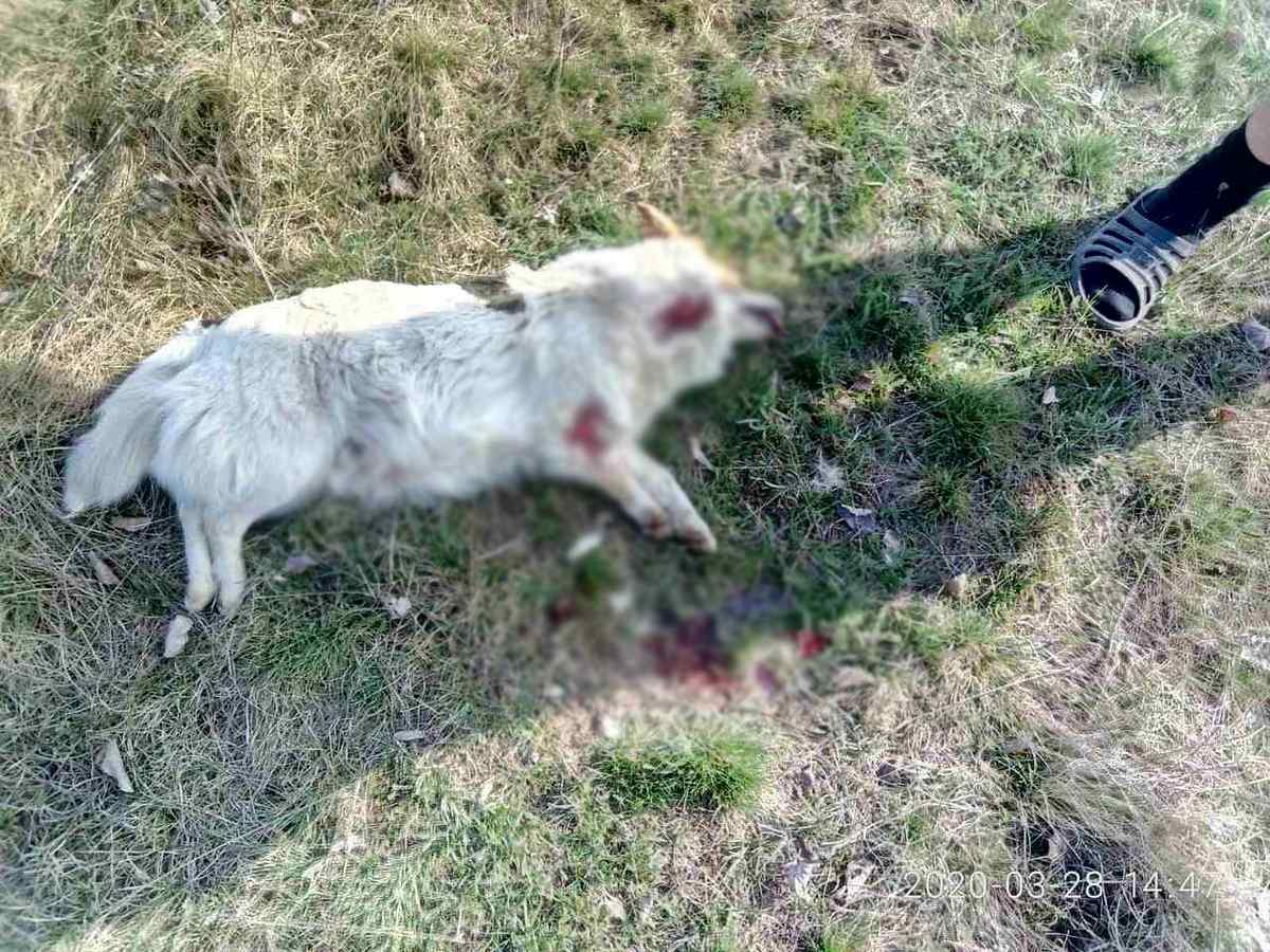 Убитое животное