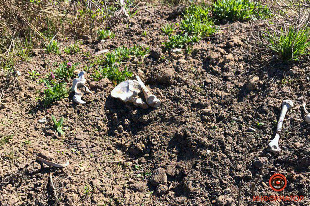 Собака нашла человеческие останки