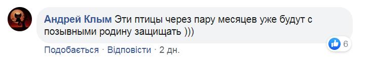 Воины спасли сов на Донбассе