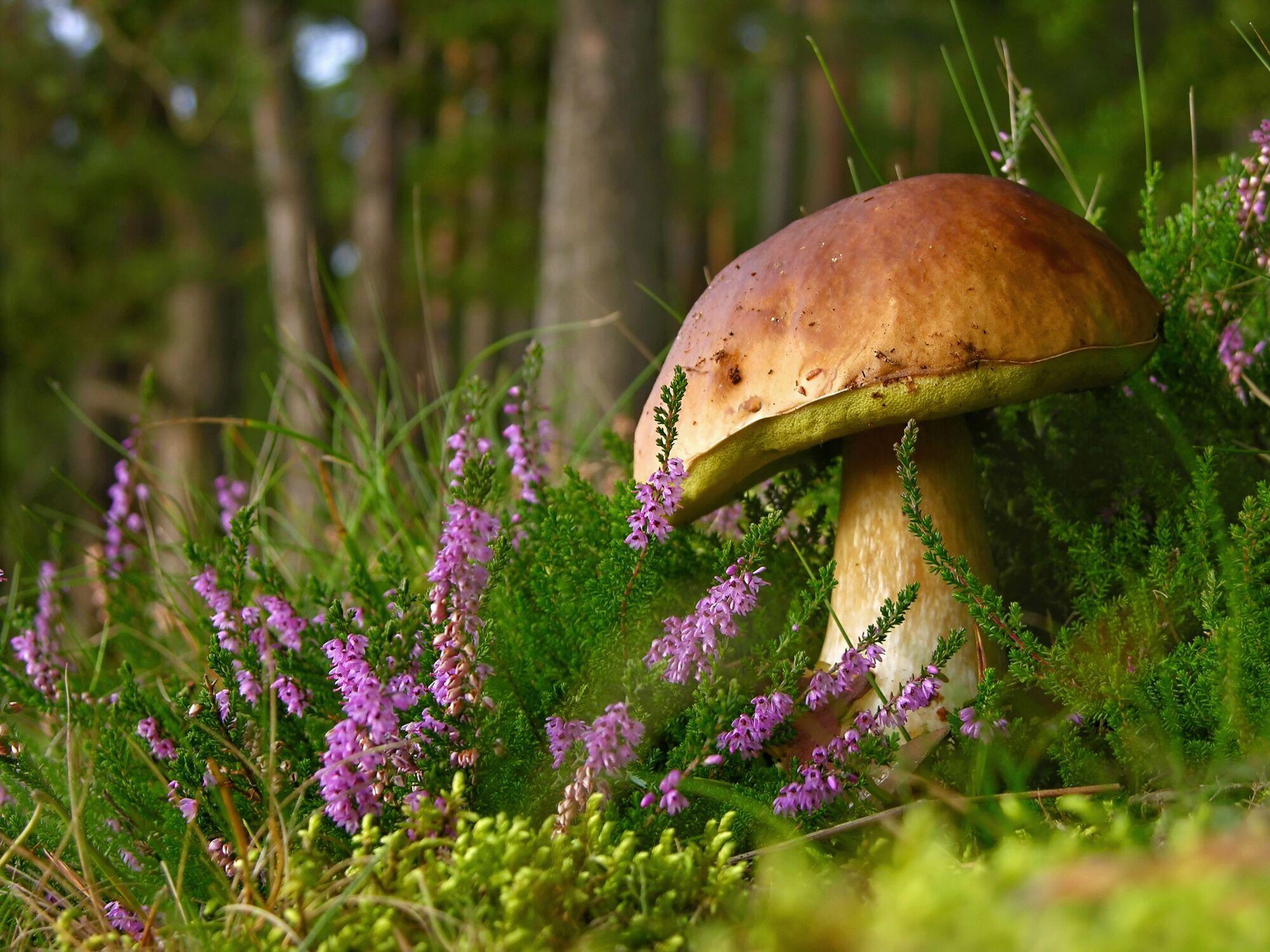 Деякі гриби можуть призвести до летального результату