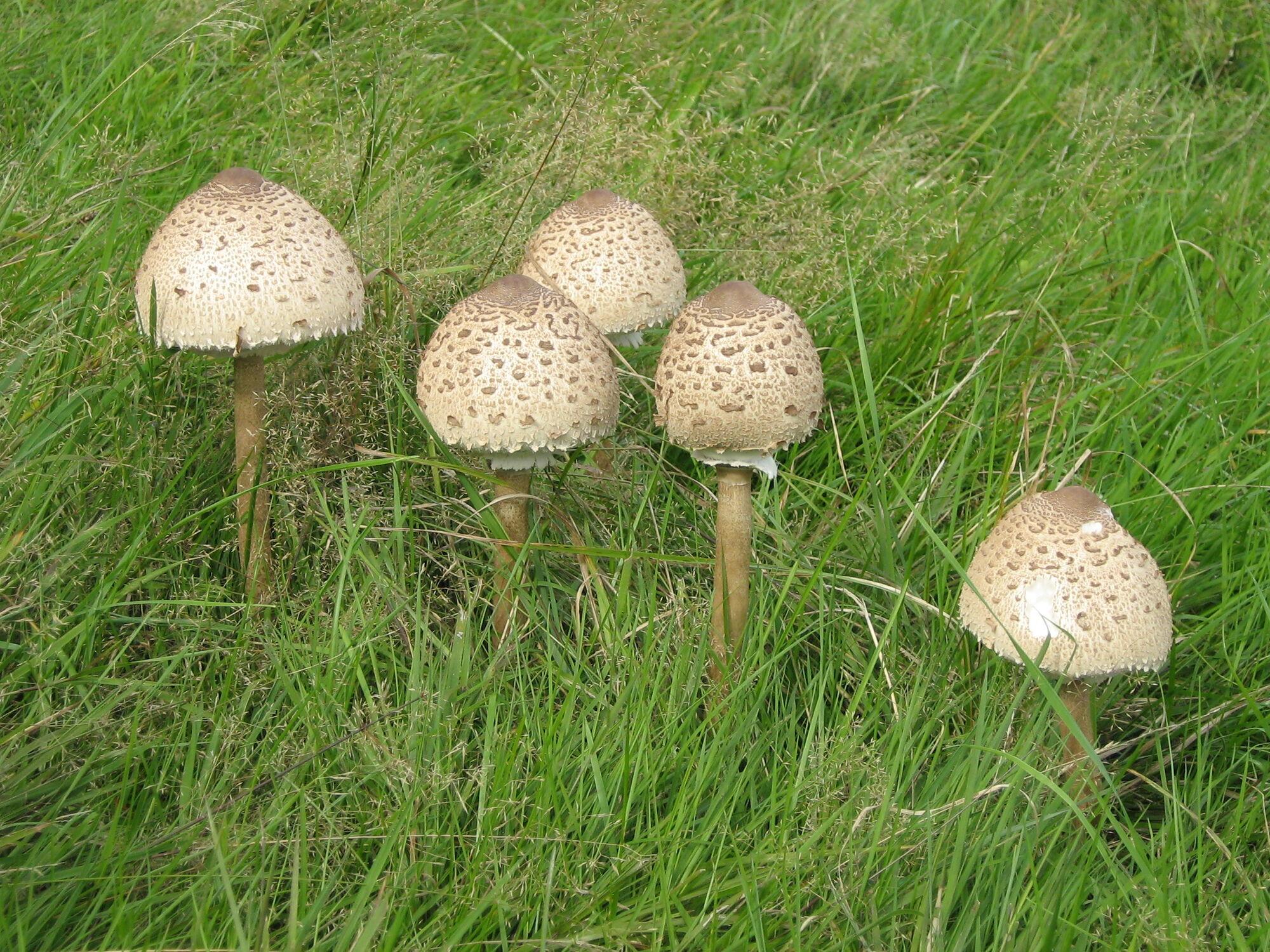 Дніпрянам рекомендують збирати лише трубчасті гриби