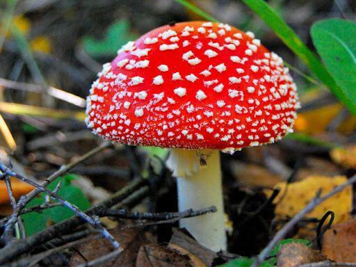Найнебезпечнішим грибом є бліда поганка