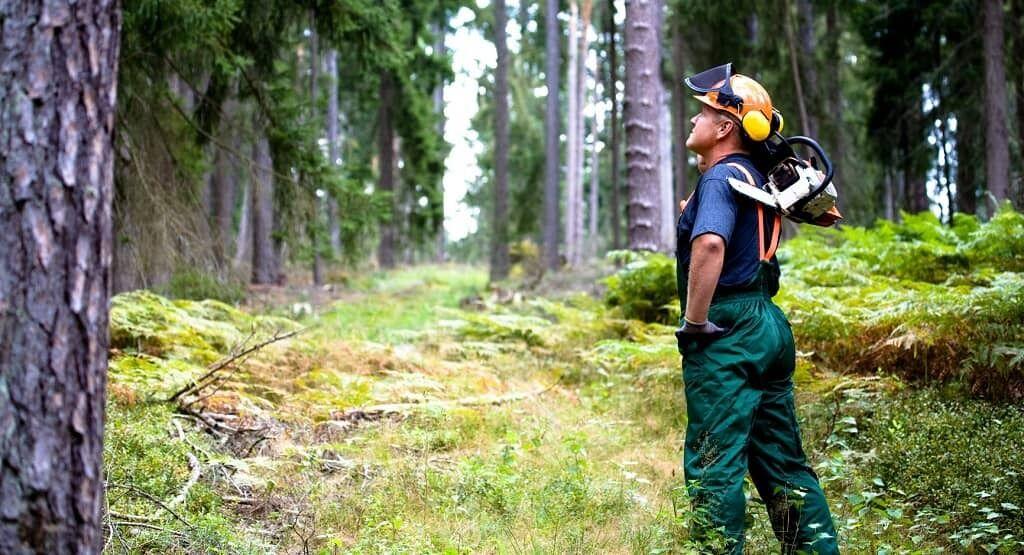 День работников леса: когда отмечают. vlv-mag.com