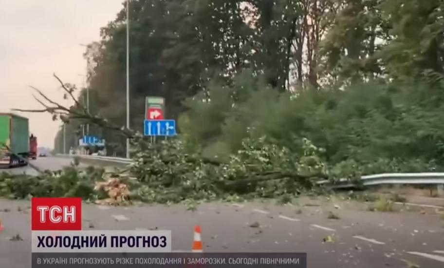 Буревій у столиці повалив дерева на дорогу.