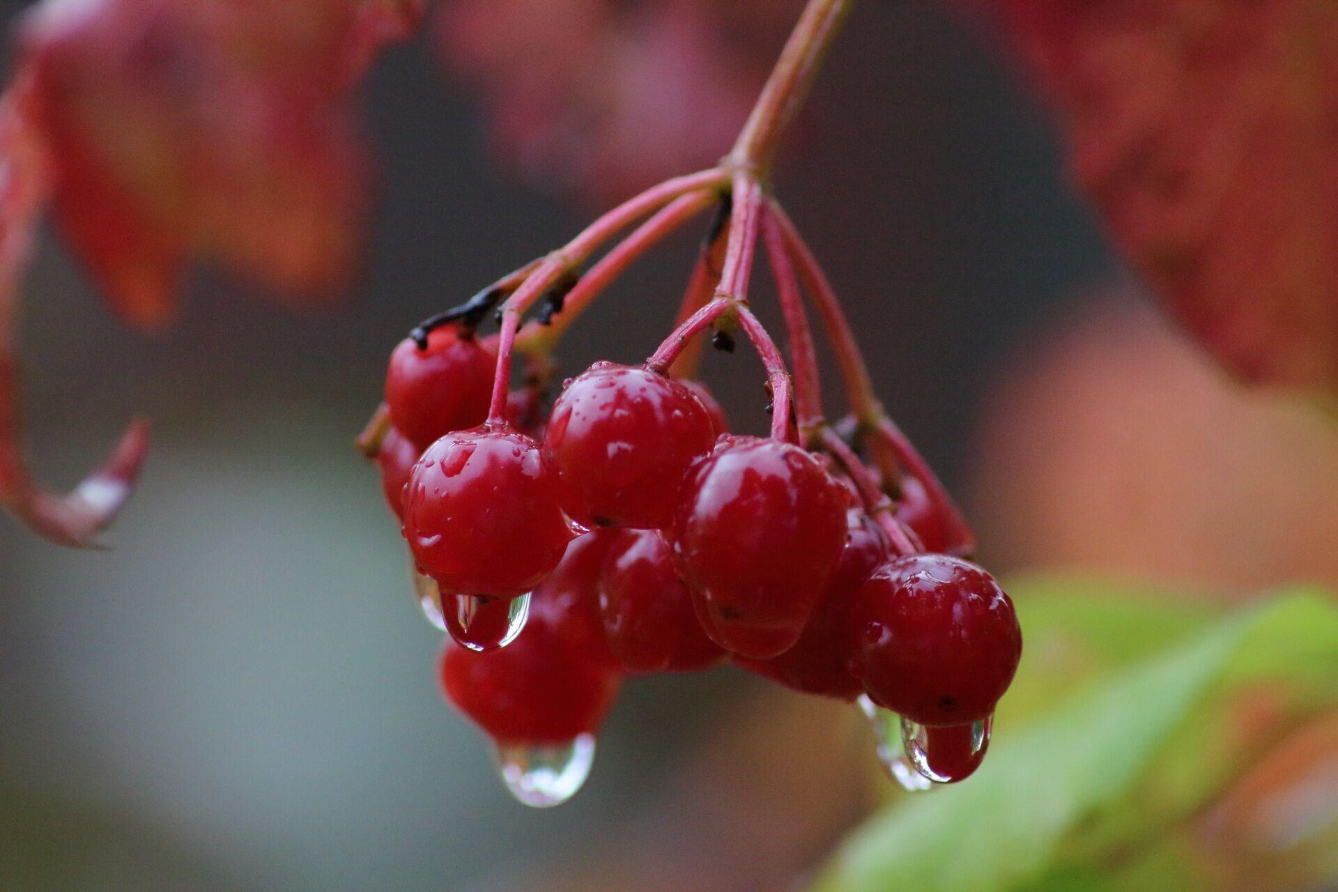 22 вересня стежили за погодою, щоб за прикметами передбачити, якою буде зима
