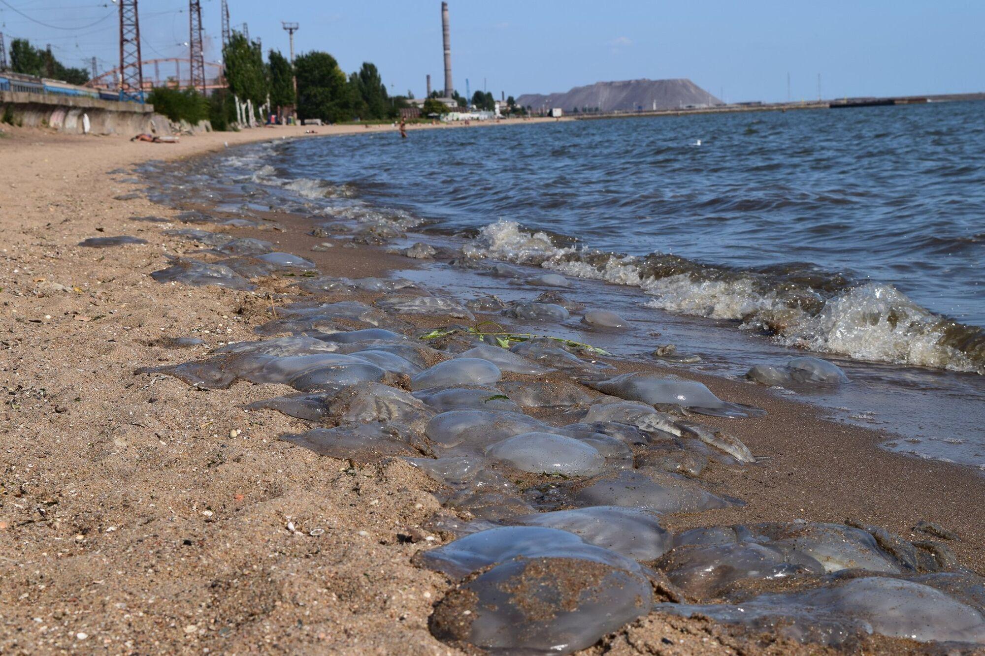 Островок Ляпино на побережье Азовского моря.