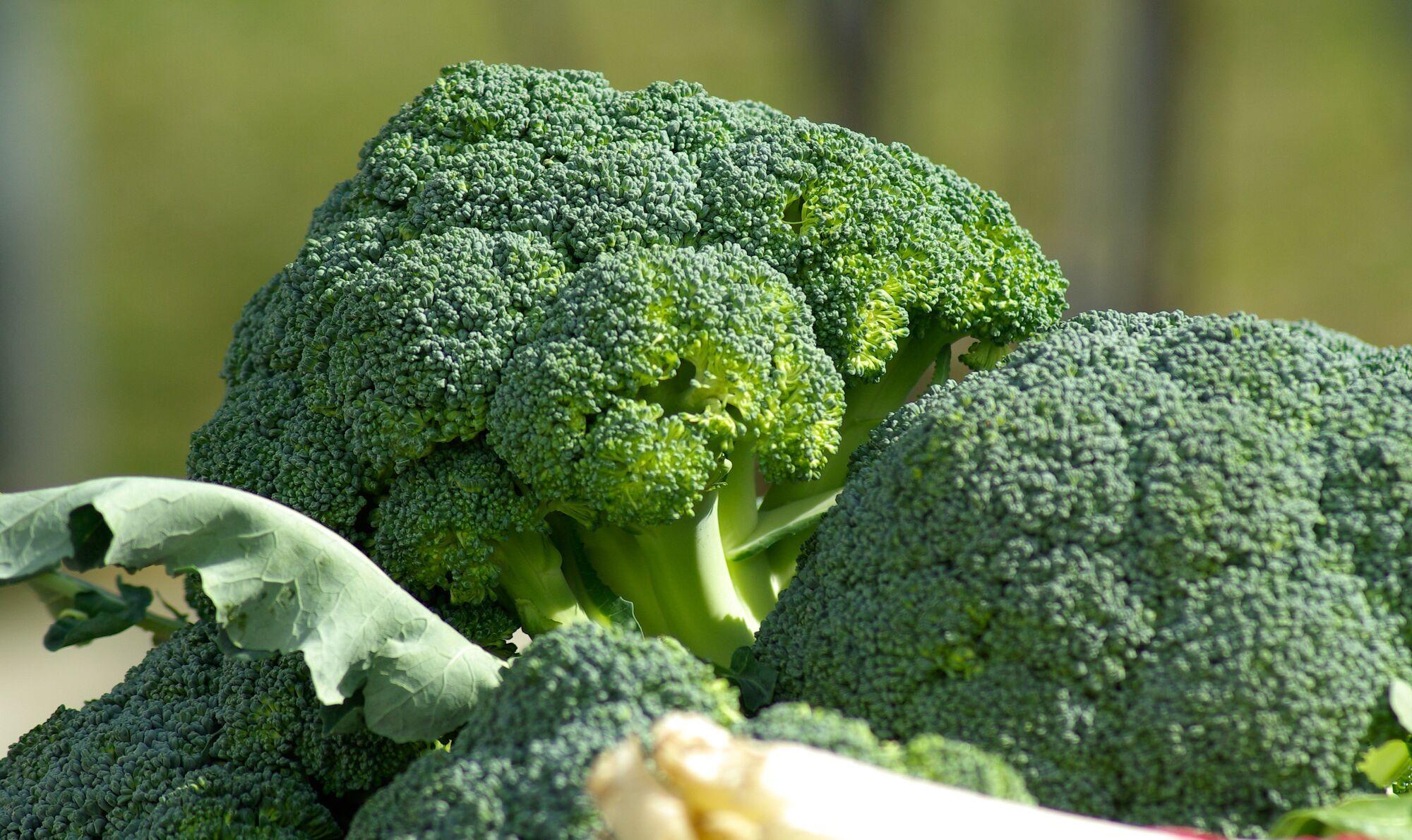 Брокколи содержит много клетчатки, витаминов A, C, E и калия