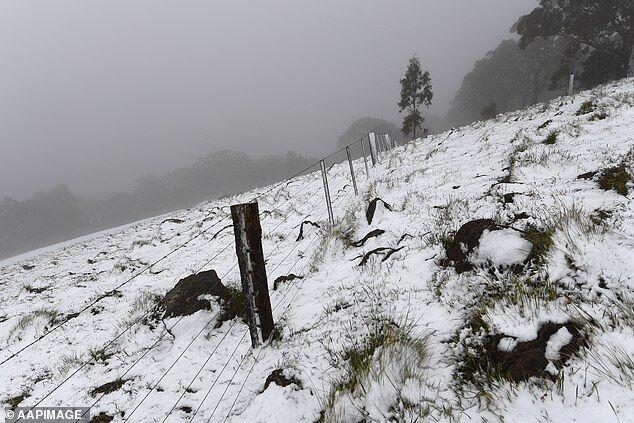 Южную Австралию засыпало снегом .