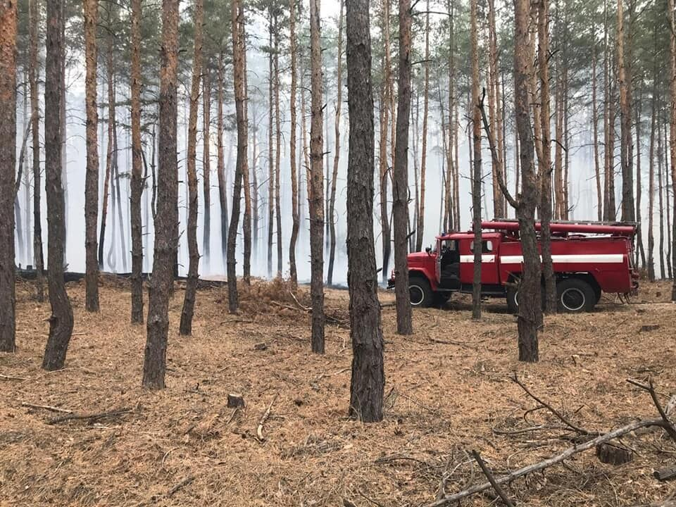 Вогонь поширився на площі 5,5 га.