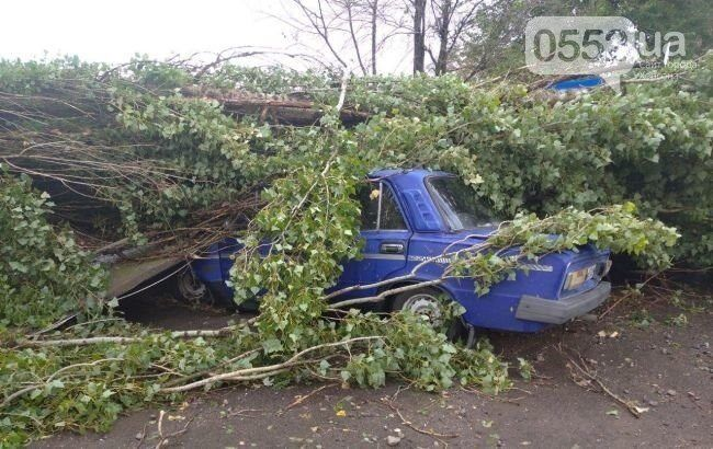 Поваленное дерево упало на автомобиль.