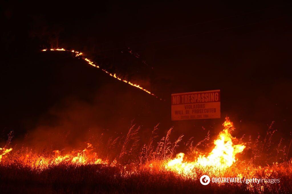 Пожары в Калифорнии уничтожили тысячи гектаров лесов