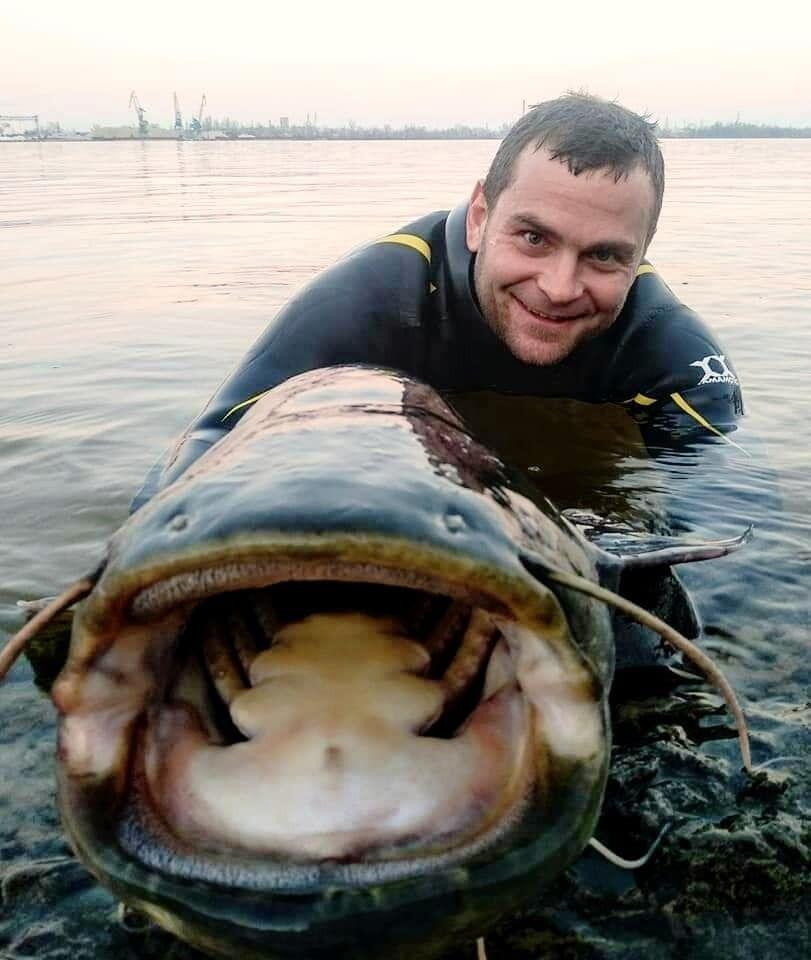 Рыбак поймал сома в Днепре.
