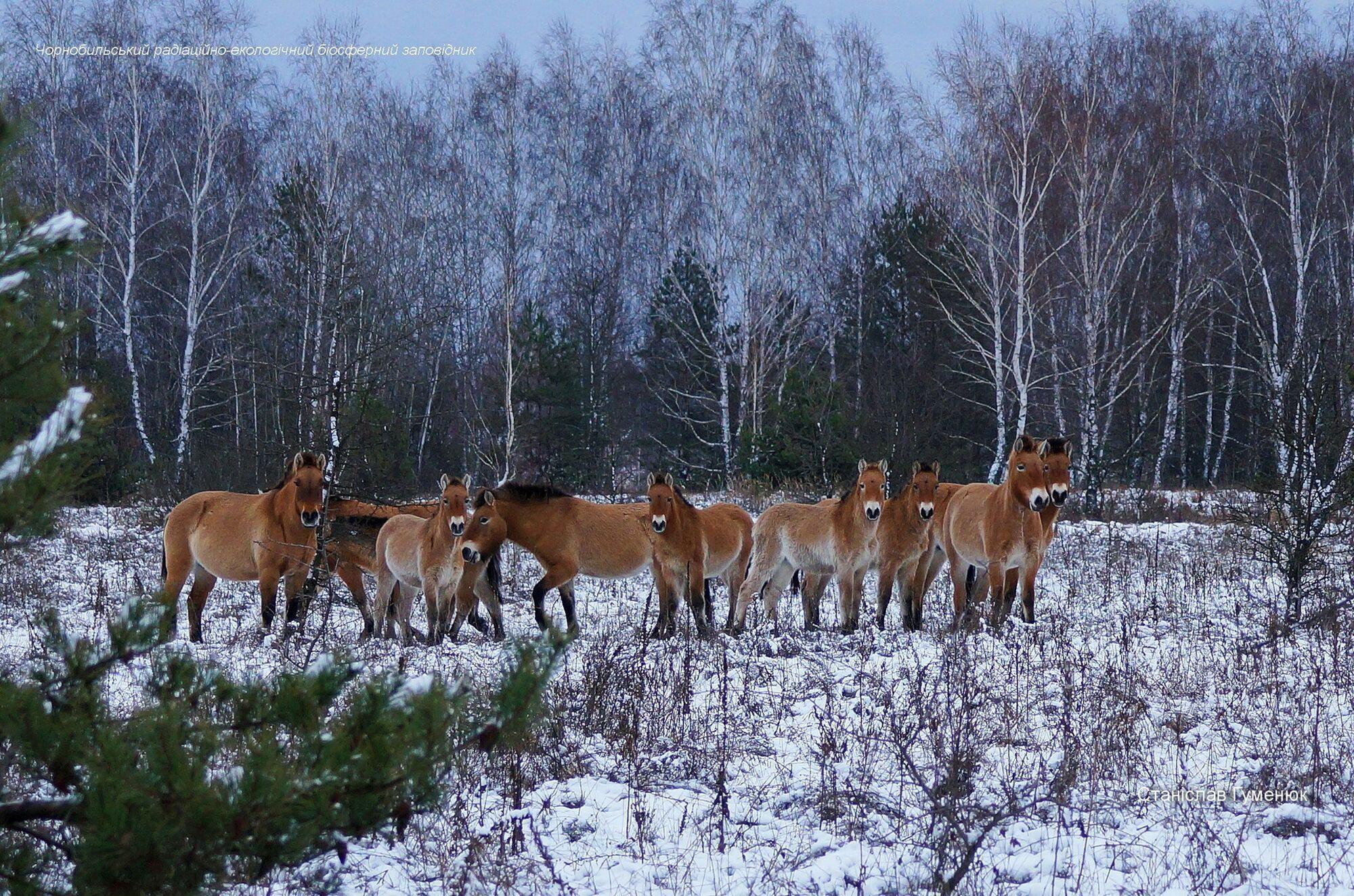 Тварини гуляли засніженими стежками