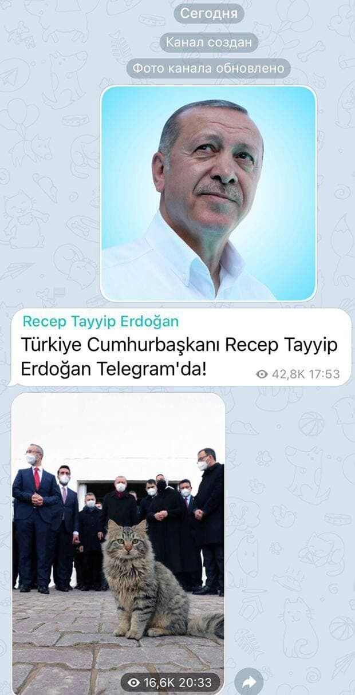 У першому повідомленні Ердоган запостив кота
