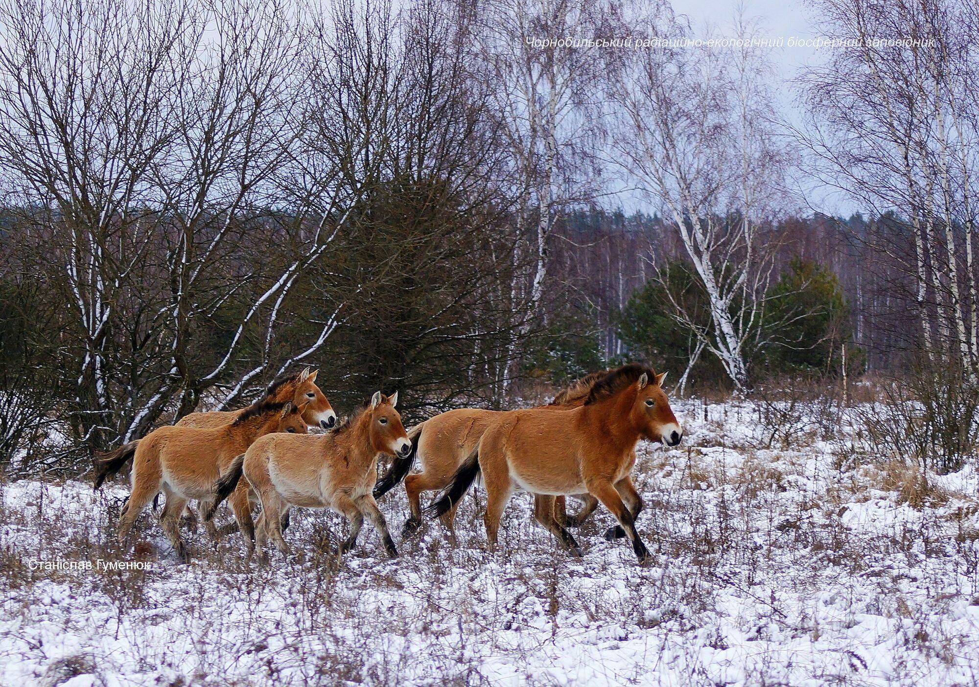 Лошадей считают с помощью дрона