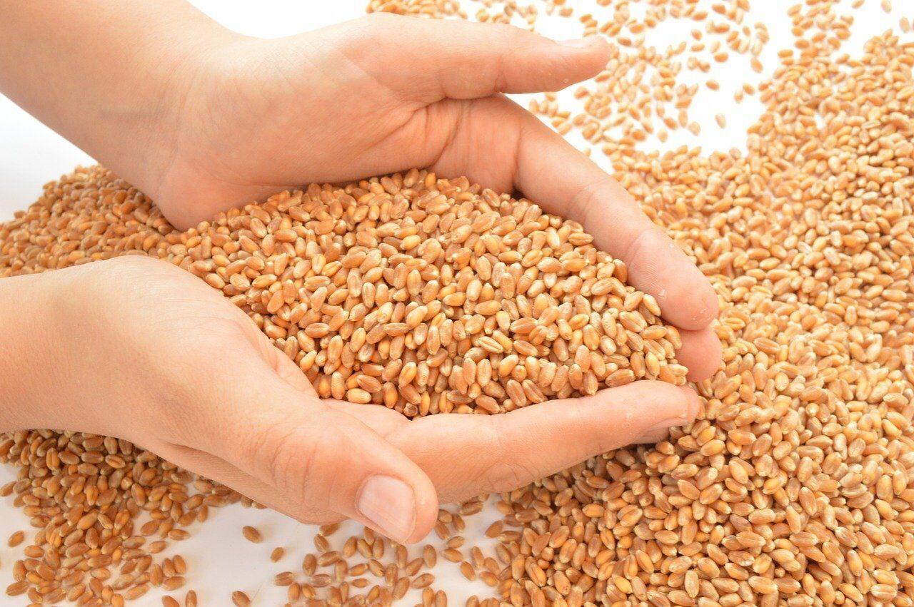 Посевать желательно зерном разных сортов