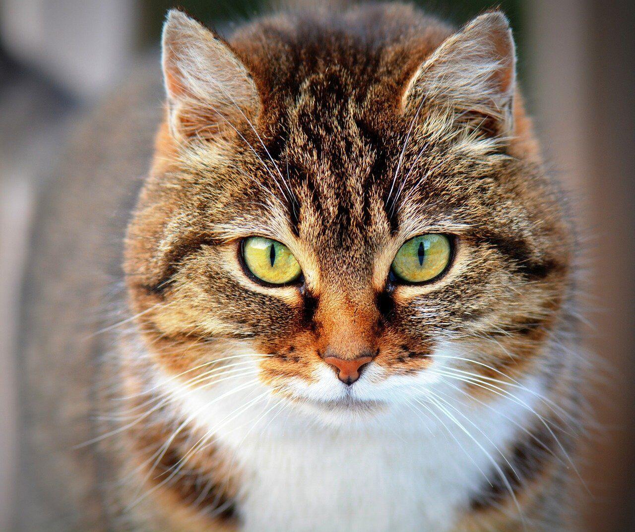 Кошек также привлекают к праздничным гаданиям