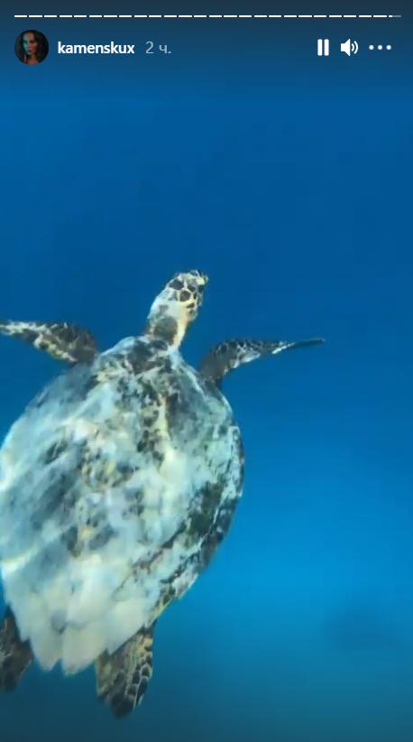 Черепаха в Индийском океане.