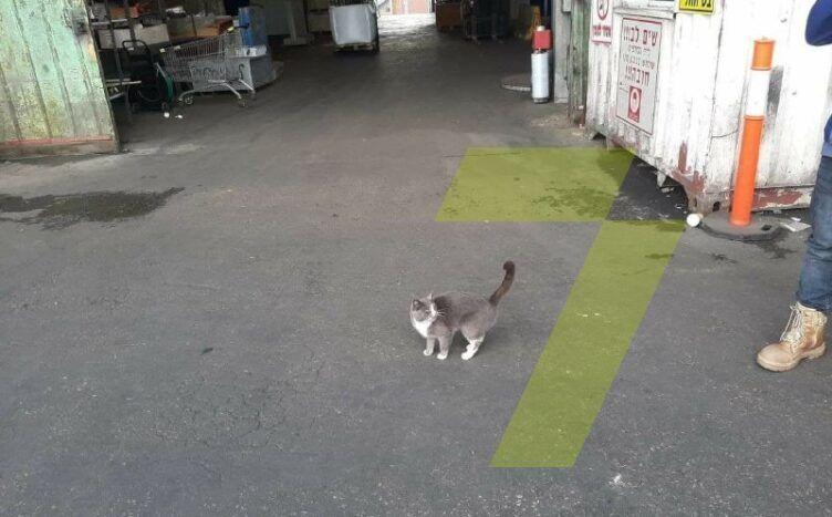 Кошка в порту Одессы