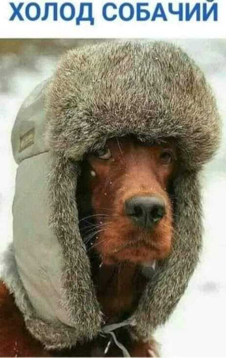 """Холод собачий"""