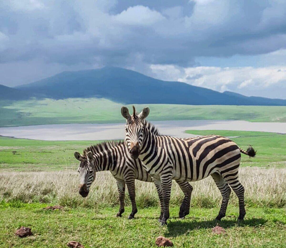 Природа Занзибара.