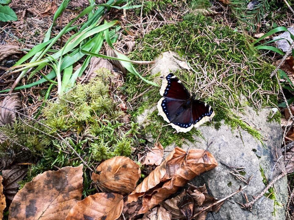 Бабочку заметили 22 января