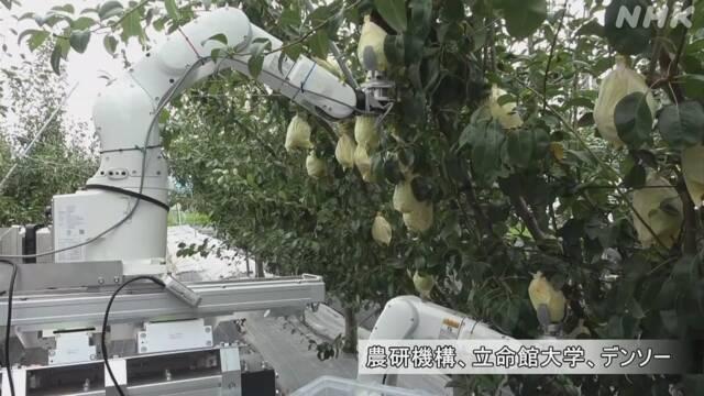 Робот, який збирає урожай