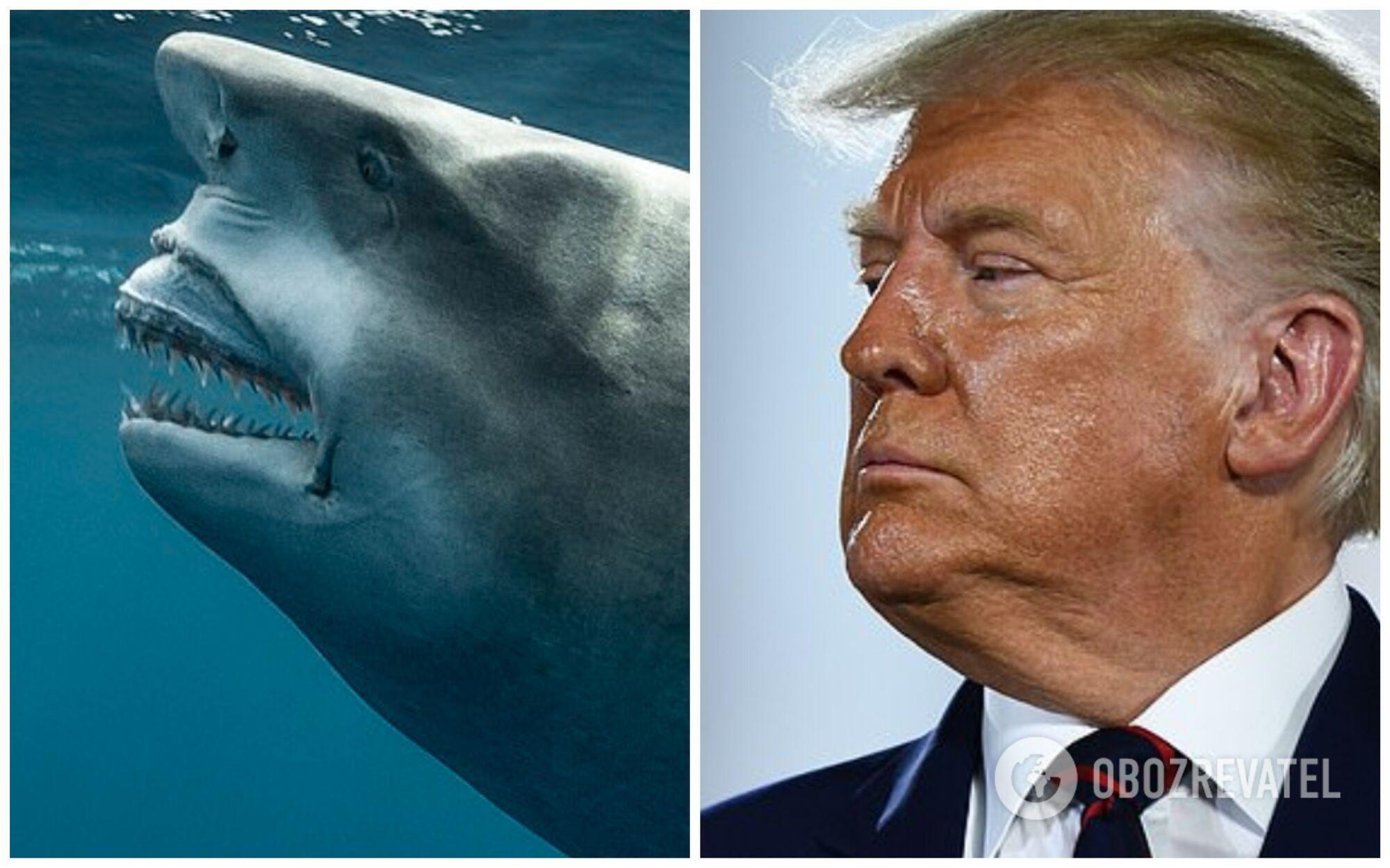 В море нашли акулу, похожую на Трампа.
