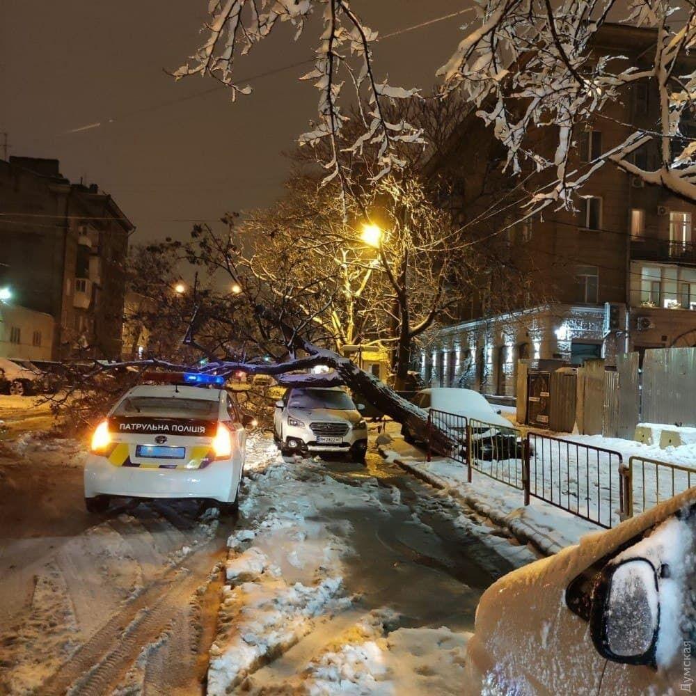 Снег повалил деревья