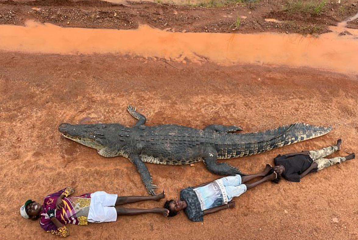 Місцеві жителі показали розмір застреленого крокодила
