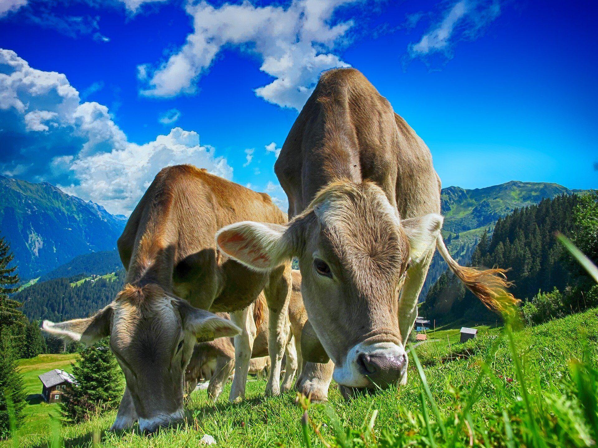 На Федулов день было принято уделять внимание домашнему скоту