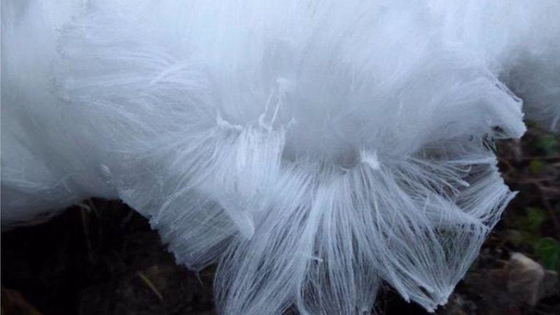 Тонкий лед на деревьях выглядит фантастически