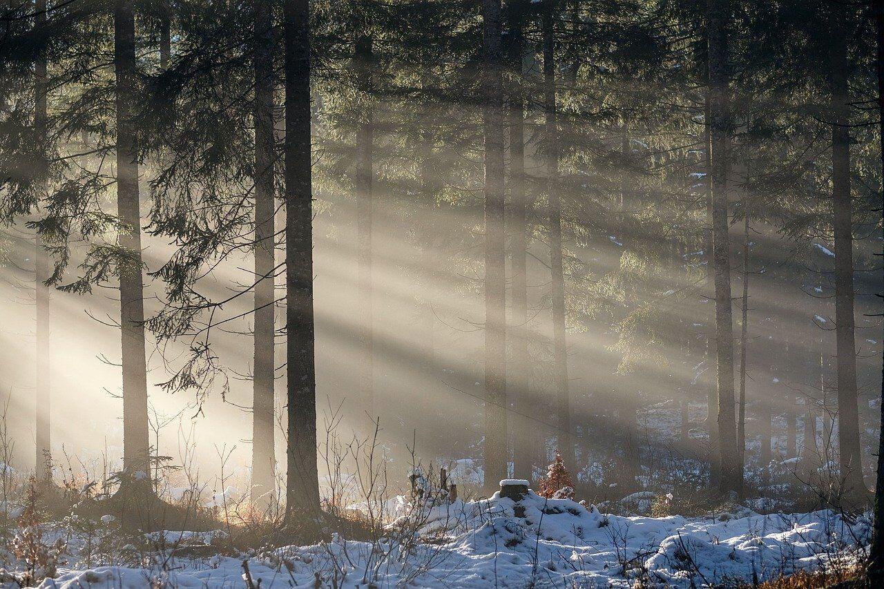 Вітер дме з півночі 11 січня – в найближчі дні вдарять морози