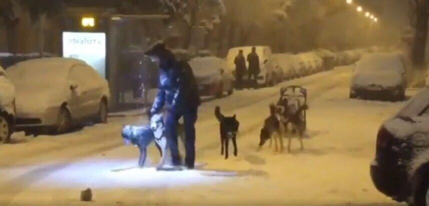 Жителі Мадрида пересуваються на собачих упряжках.