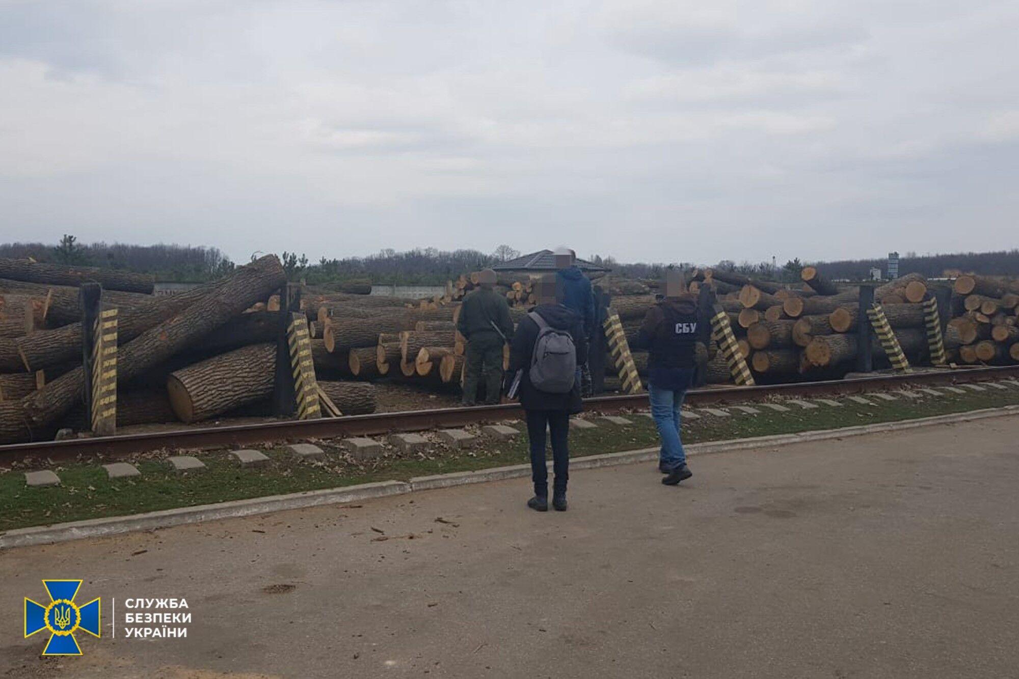 СБУ розкрила масштабні схеми незаконної вирубки лісових ресурсів