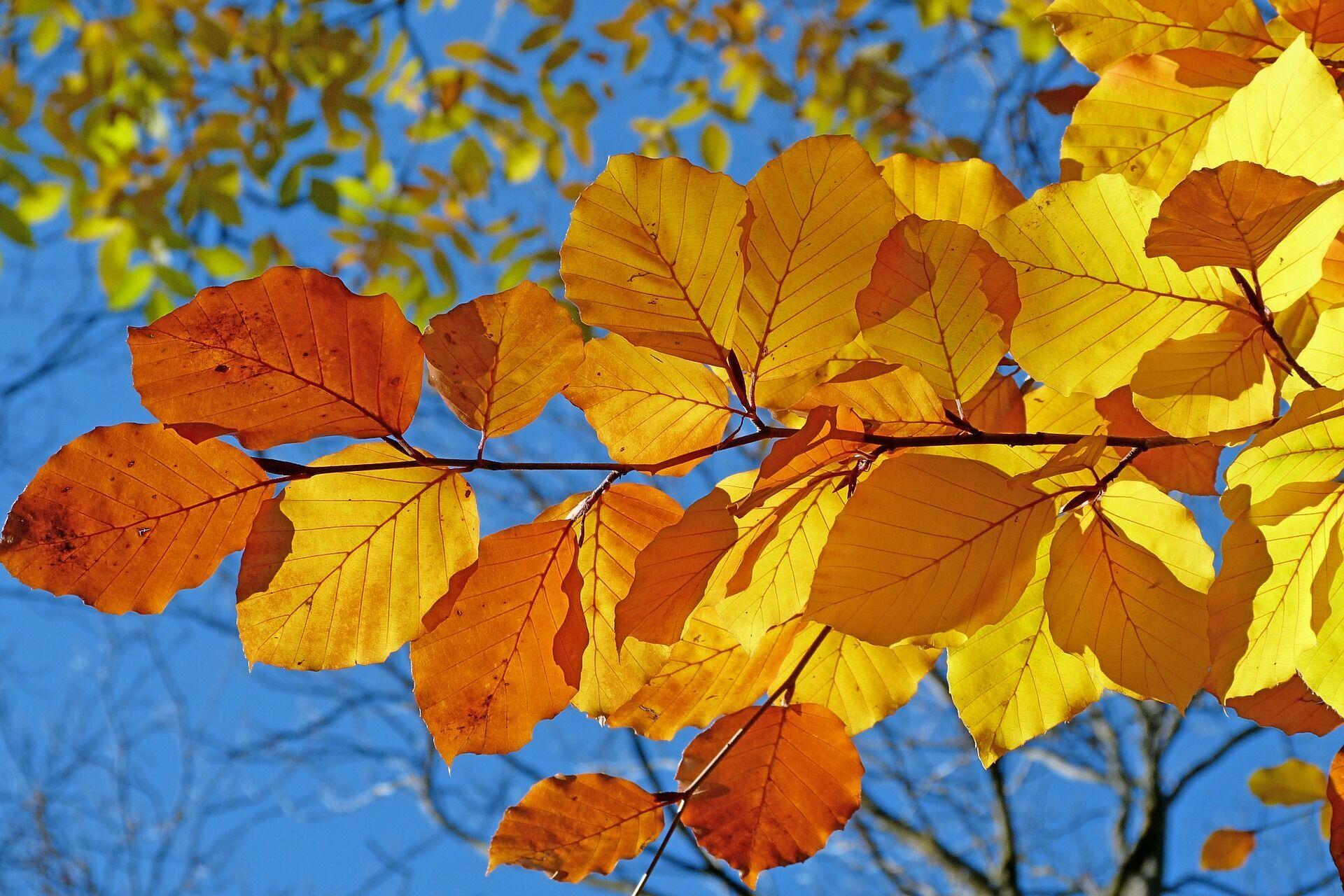 Листья поздно опадают – к суровой зиме и тяжелому году, рано – к легкому году и мягкой зиме