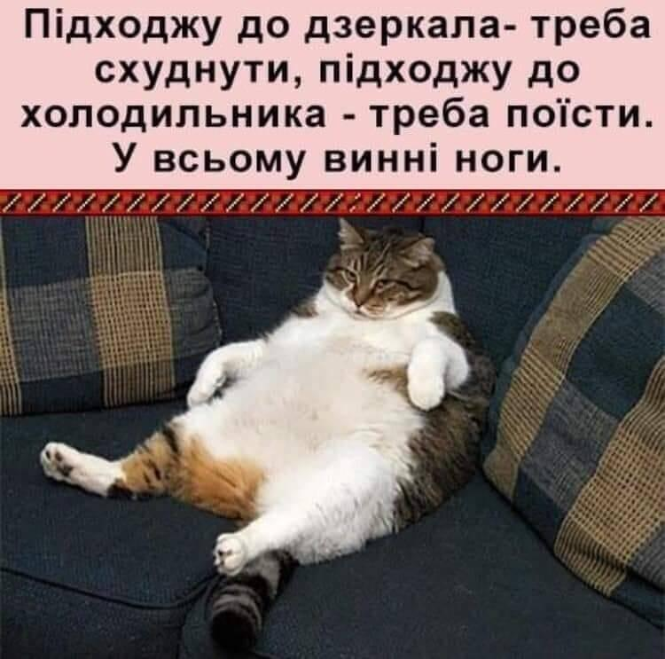 Мем о похудении