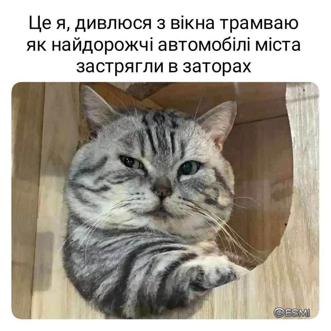 Мем о транспорте