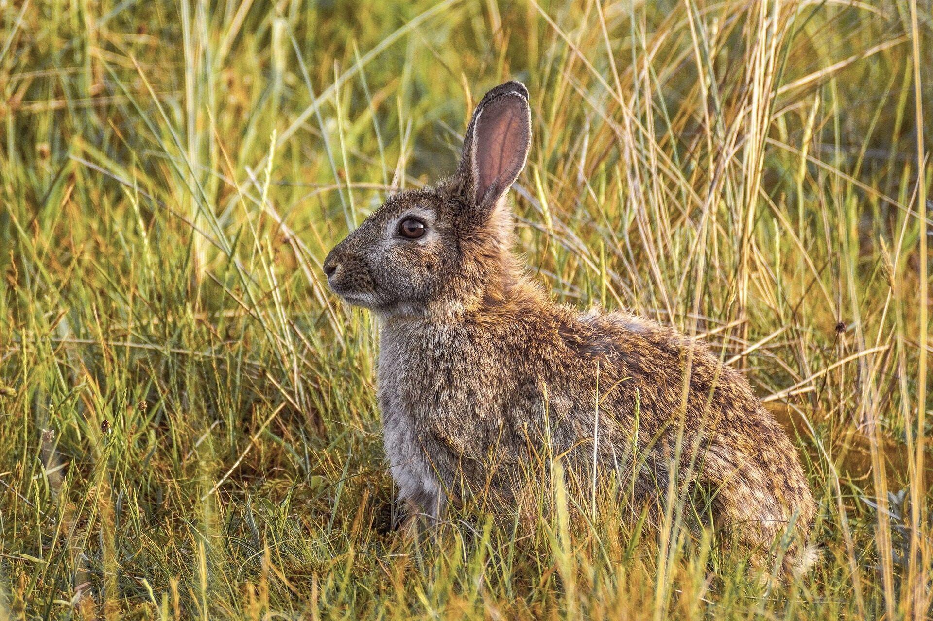 С Феофана, как правило, начиналась охота на зайцев