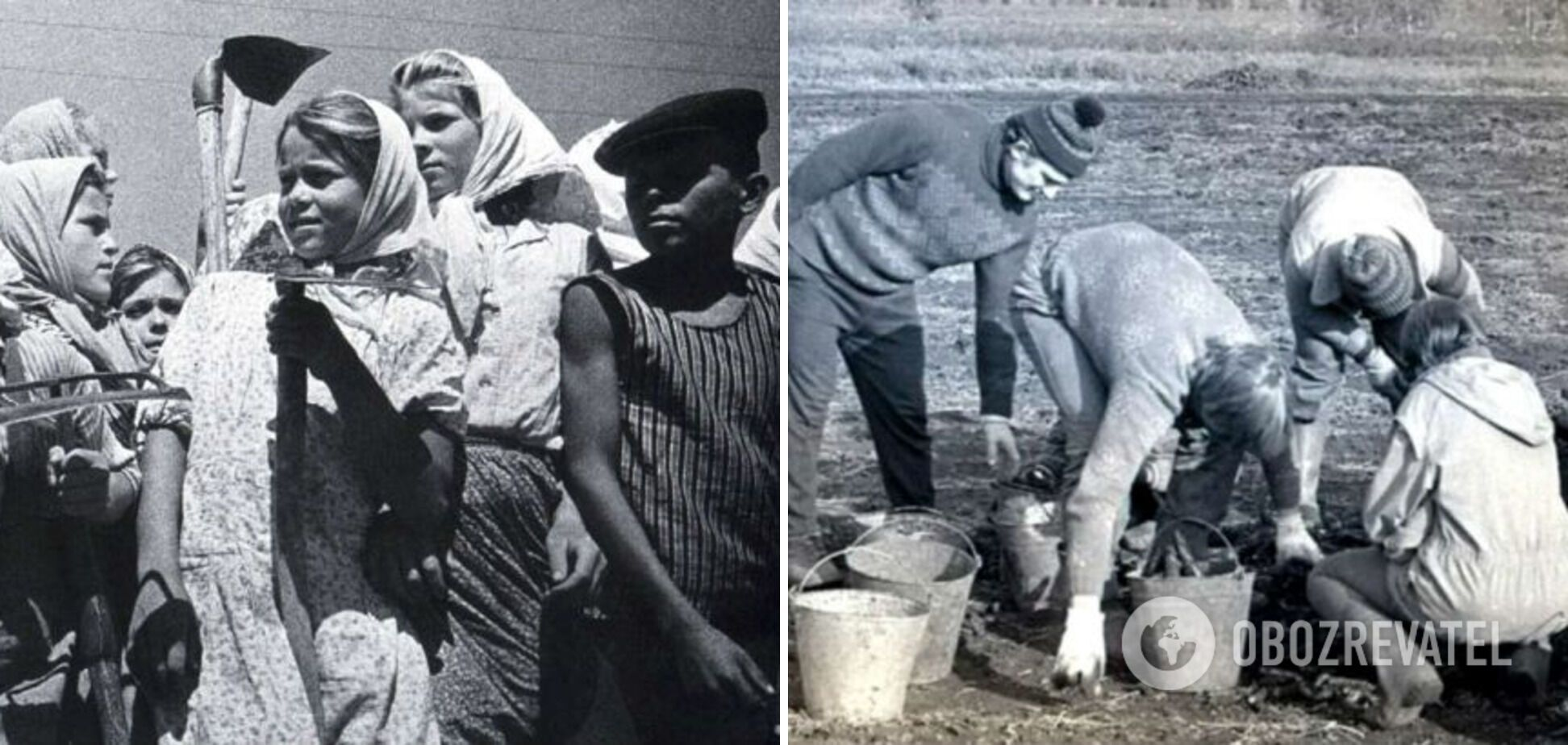 Студенты и школьники работали в колхозах.