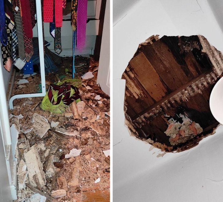 Потолок чуть не упал на собачку.