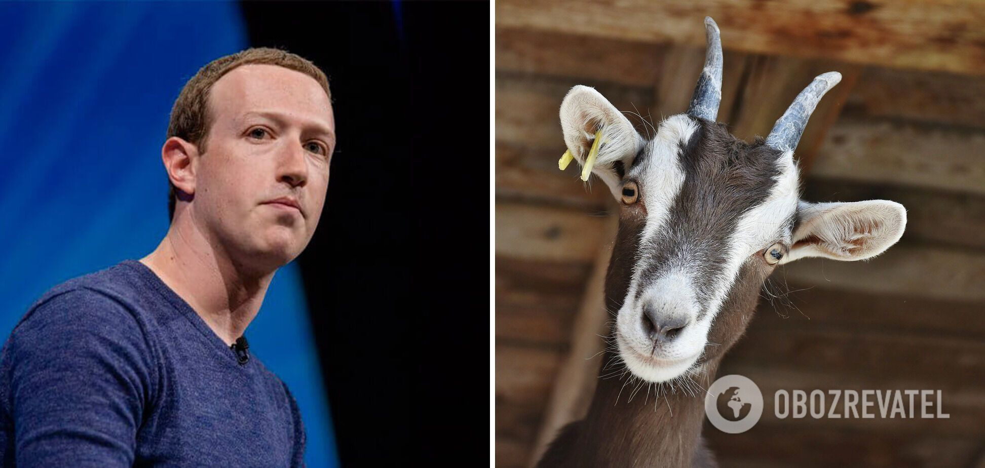 Цукерберг їсть тільки м'ясо тих тварин, яких він убив сам